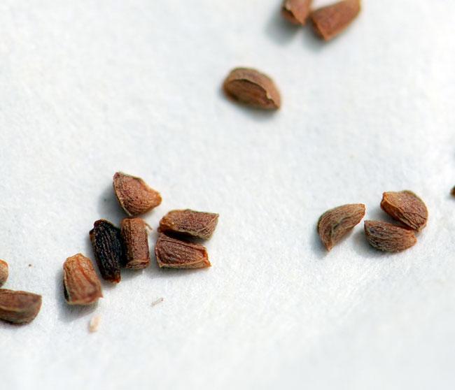 mystery-seeds-213-many