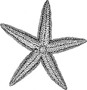 Starfish_(PSF)