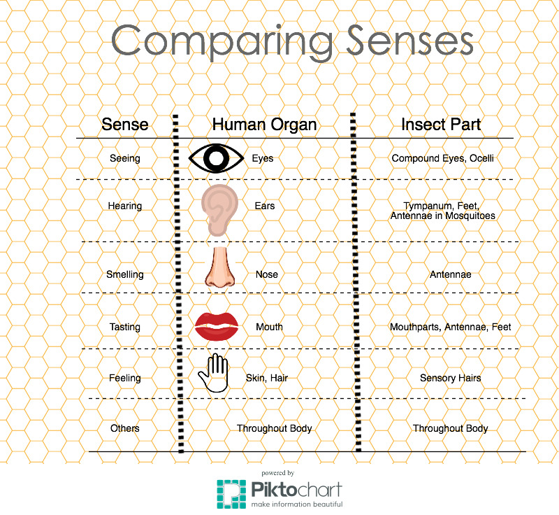 Human-vs-insect-senses-graphic