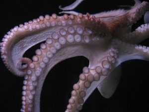 Octopus-arms