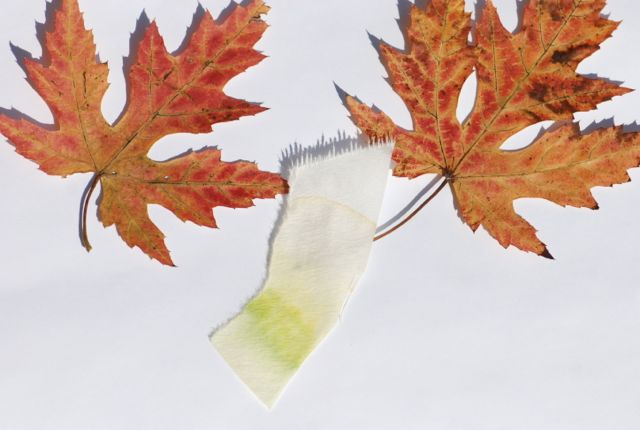 autumn-leaves-chromatography094