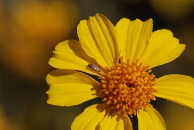 plant-bug_0296