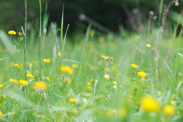 summer-field-C_0295