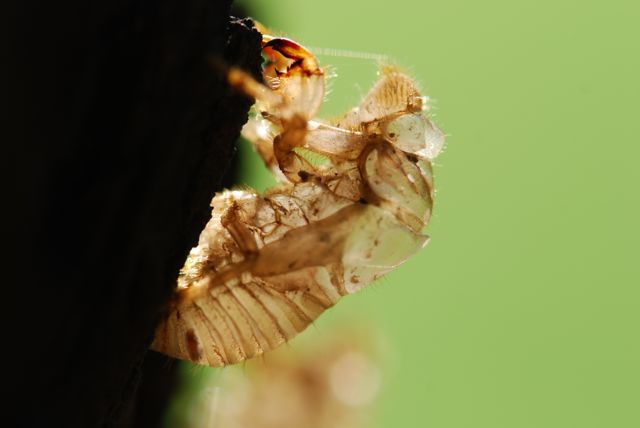 cicada-nymph-close-gd42