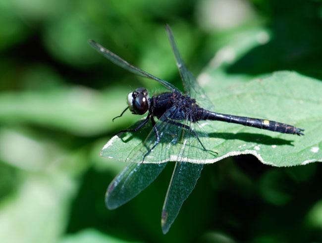 dragonfly-ny_0649