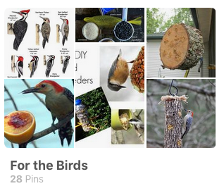for-the-birds-pinterest-board