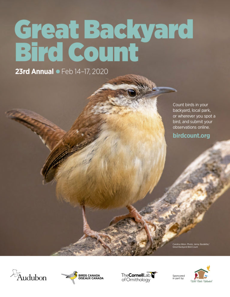 Great Backyard Bird Count #GBBC 2020