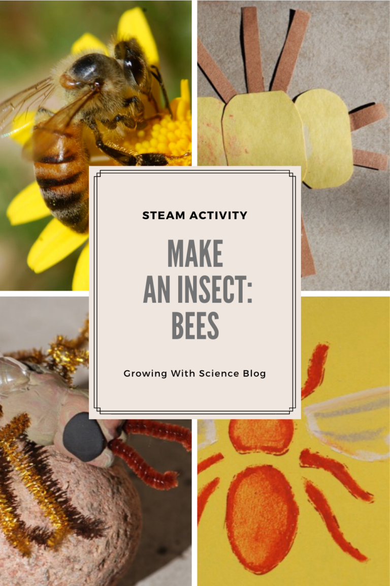 Make an Insect STEAM Activity:  Bees