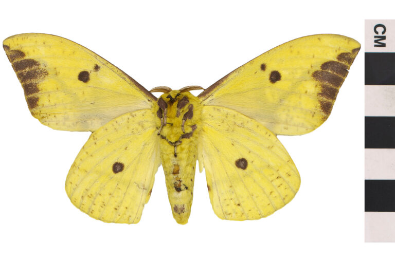 Time to Celebrate National Moth Week